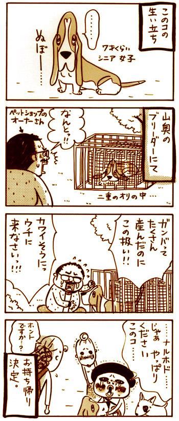 Higuchineko36